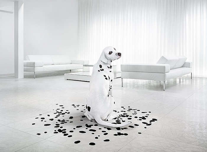 Andy Glass | Bingham Dalmatian