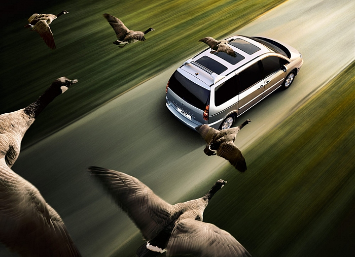 Andy Glass | Peugeot Geese