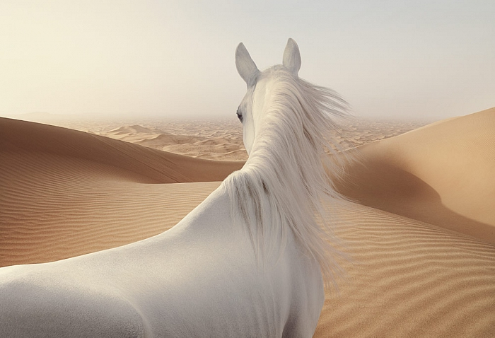 Andy Glass | Sand Horse 2
